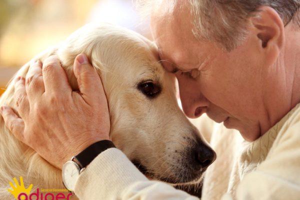 Beneficio de las mascotas a los mayores destacada