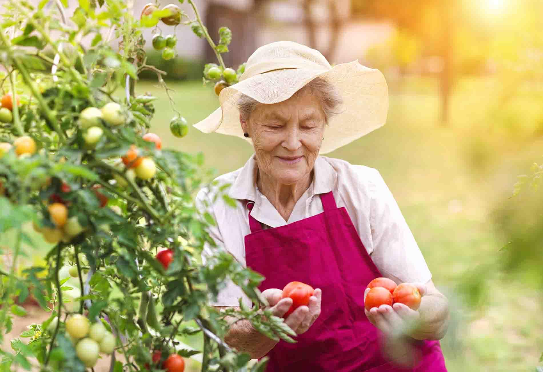 Alimentación en verano fruta fresca
